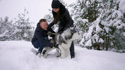 Family portrait of cute happy couple hugging with their alaskan malamute dog Footage