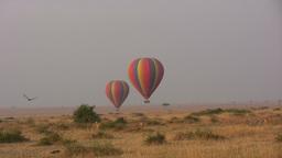 Lions following a hot air balloon Footage