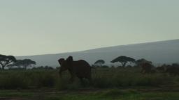 Running elephant Footage