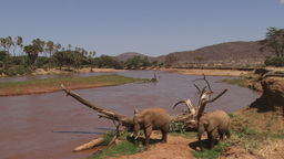 Two elephants feeding along a riverbank with a beautiful background Footage