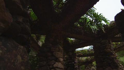 Rock Structure and plants in Jardim Botanico, Rio Footage