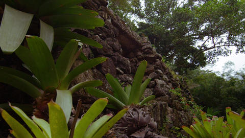 Plants on the bank in the Jardim Botanico, Rio Footage