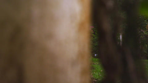 Panning shot of arches in botanical gardens Footage
