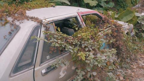 Apocalyptic Abandoned Car 17 Footage