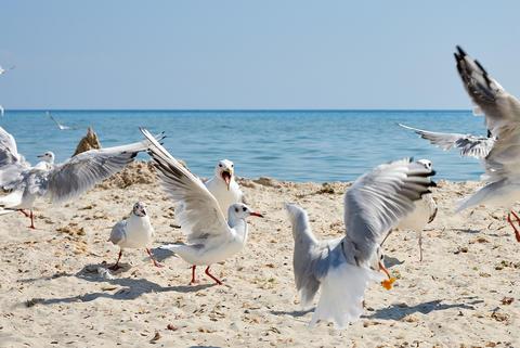 flock of seagulls on the beach フォト