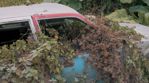 Apocalyptic Abandoned Car 15 Footage