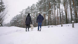 Loving Man and woman walking with Siberian husky in winter forest smiling and Footage