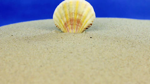 Approaching seashell sticking out of the sand, close-up Stock Video Footage