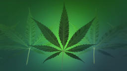 MARIJUANA LEAF LOOP BACKGROUND Animation