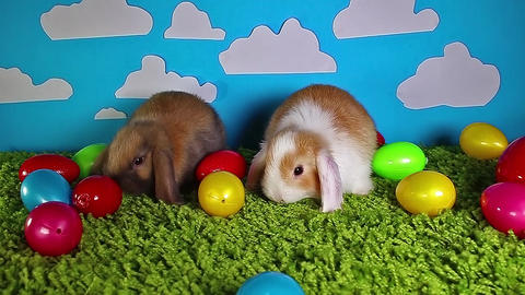 Easter bunny cute rabbit with eggs on yellow studio… Stock Video Footage