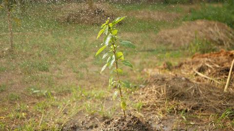 Watering plants in garden Footage