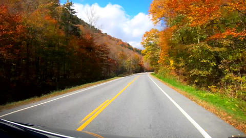 TimeLapse 10X - Driving Under Trees in Bright Sunlight in Peak Color During Fall Footage