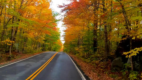 TimeLapse - Driving Under Trees and Around Curves as Trees Change Colors During Live Action