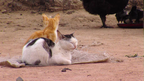 Two cats sitting at a farm Live Action