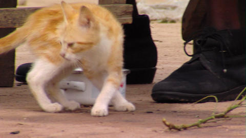 Cats under table in Africa Footage