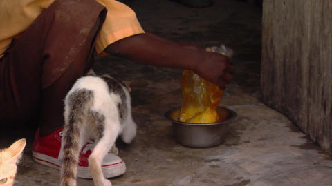Cats being fed in Africa Stock Video Footage