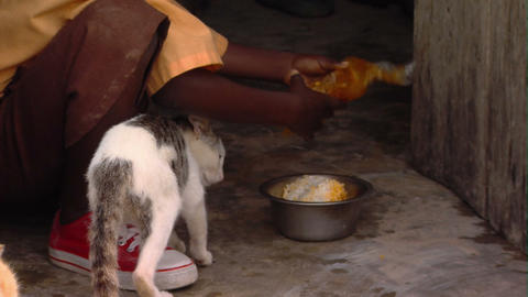 Cats being fed in Africa Footage