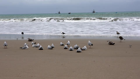 San Pedro, Ecuador - September 15, 2018 - Seagulls Sit and Fly on Beach Footage