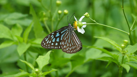 Butterfly and flower Stock Video Footage