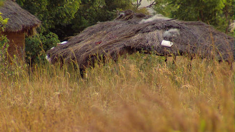 Grass huts in a field in Africa Footage