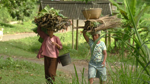 People carrying sticks on their heads in Bali Footage