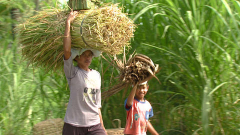 Clip of people carrying sticks on their heads in Bali Footage