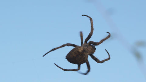 Close up of arachnid on its invisible web Footage