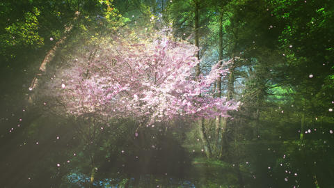 Sakura Tree And Forest CG動画素材