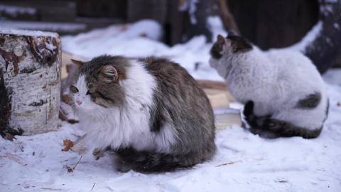 Сats sitting in the yard in the snow Footage