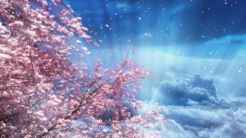 Sakura Tree And Dreamy Blue Sky CG動画素材
