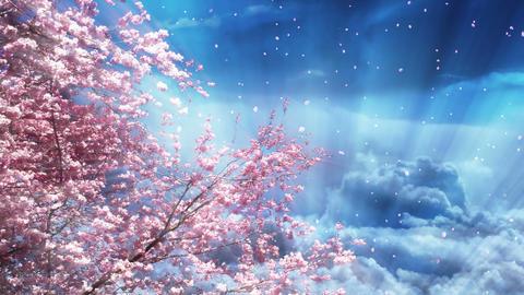 Sakura Tree And Dreamy Blue Sky Stock Video Footage