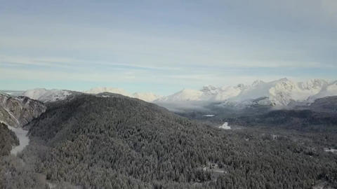 Tree tops of Alaska Live Action