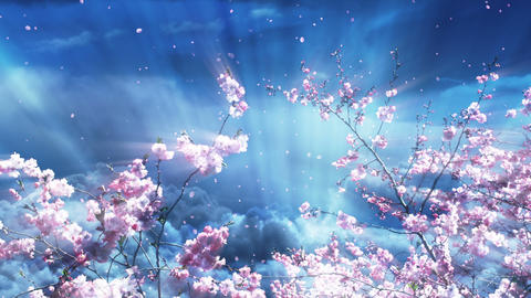 Sakura Tree And Dreamy Blue Sky Stock Video Footage