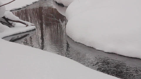 Trees are reflected on the surface of a non-freezing stream GIF