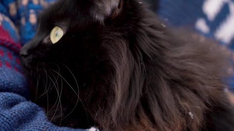 Black cat is held on its hands outdoors in the winter,... Stock Video Footage