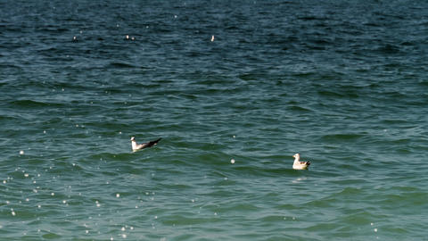 Seagull floating on sea waves Stock Video Footage
