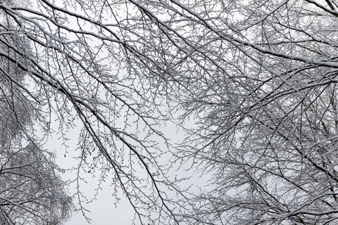 Branches covered with snow フォト