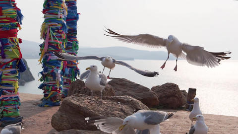 Seagulls against shamanic columns Footage