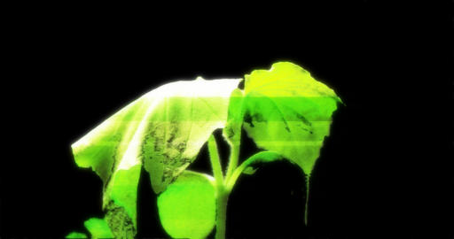 Plant growing Hologram Style isolated with alpha channel