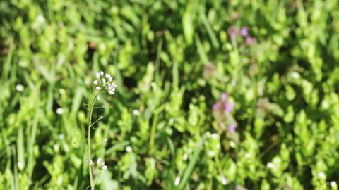 Spring flower in spring Footage