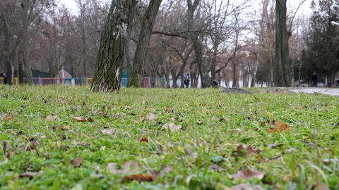 day in a city park with green grass in the middle of trees Archivo