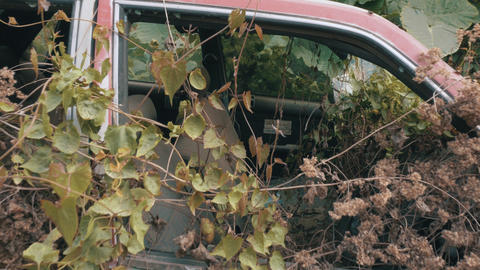 Apocalyptic Abandoned Car 07 Footage