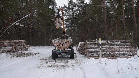 Timber Carrier Loader Footage
