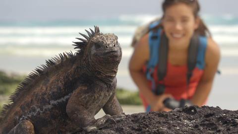Wildlife photographer and tourist on Galapagos taking photo of Marine Iguana Footage