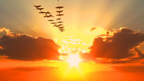 Sunset sky and migratory birds flock seen from opened window GIF