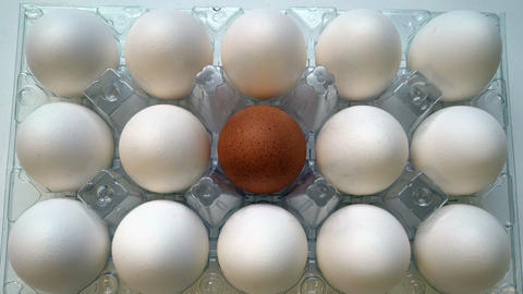 One brown egg among white ones in box. Individuality concept. Choice talent Footage