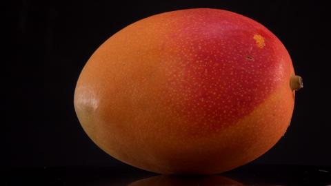 Fresh yellow mango fruit solated on black backgrounds, turntable Footage