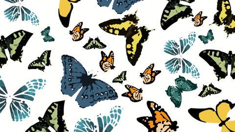 Butterflies Stock Video Footage