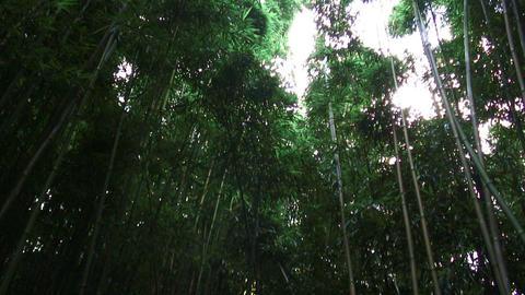 Tall green tropical trees in Hawaii Footage