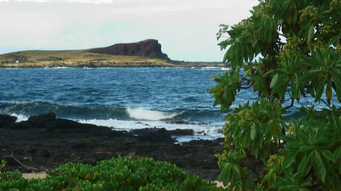 Hawaiian shoreline with volcanic rock and a tree in the foreground Live Action